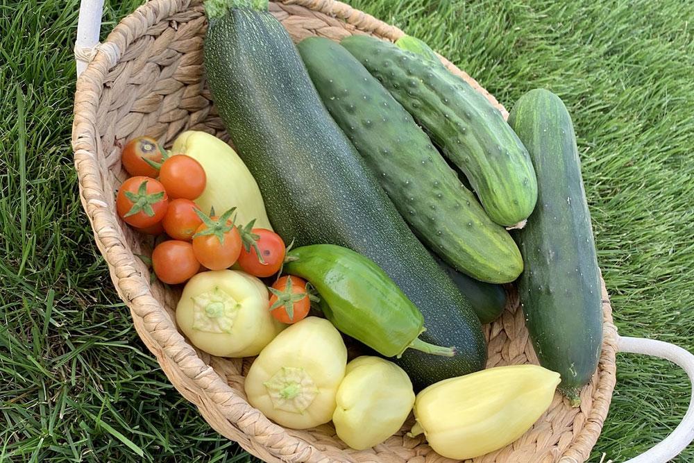 vsg_vegetation-cucumber_small